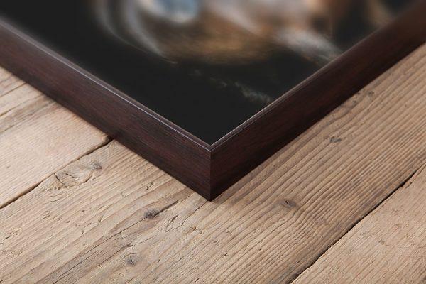 Box Frame dierenfoto