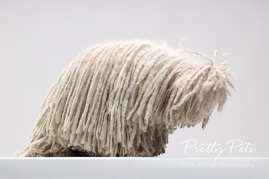 hondenfotografie Puli