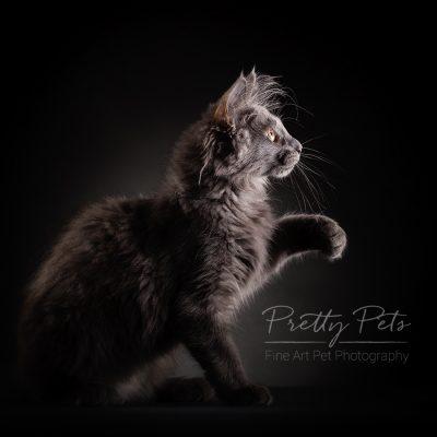 portfolio kattenfotografie