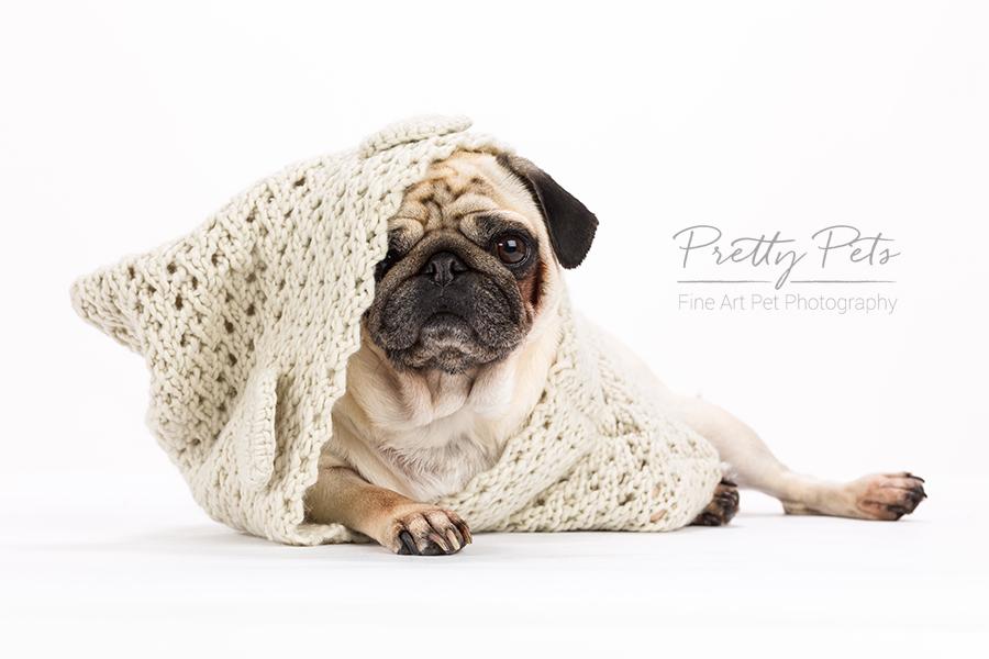 hondenfotografie mopshond - pug