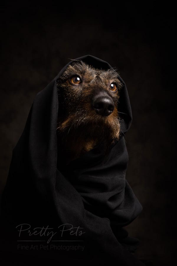 hondenfotografie low key portret teckel