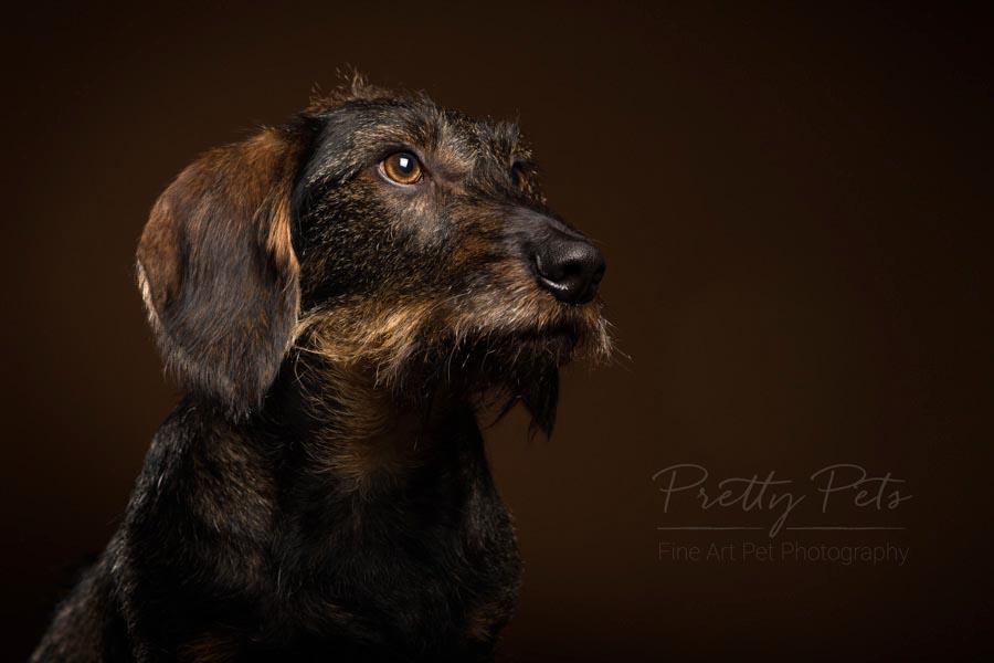 hondenfotograaf teckel
