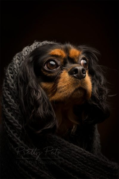 Pretty Pets fotoshoot