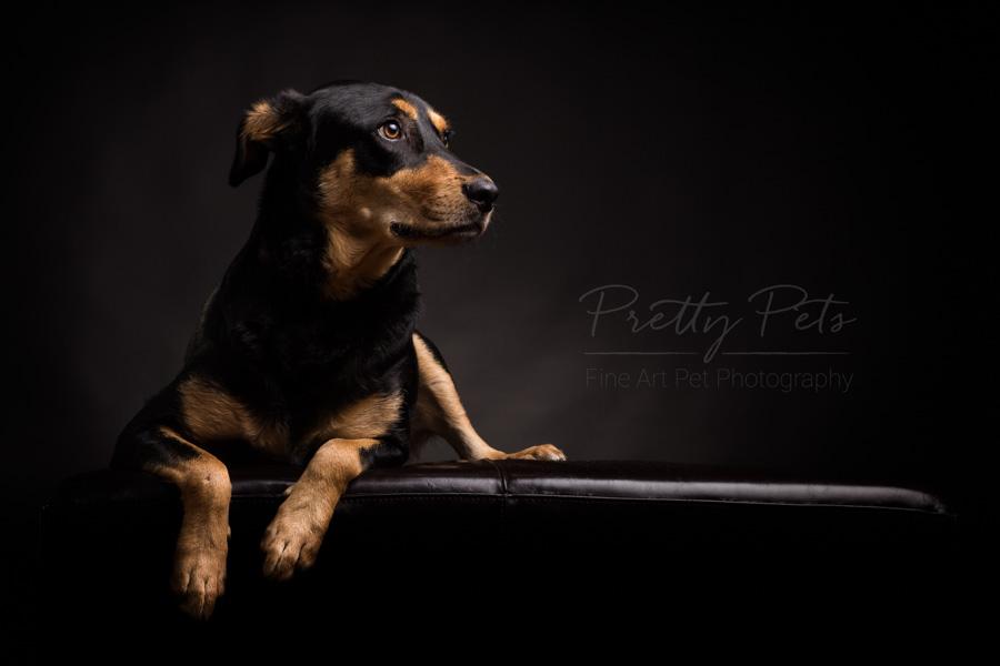 portetfotografie hond