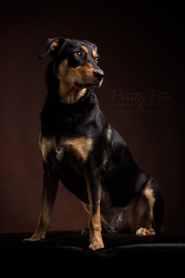 hondenfotografie in studio