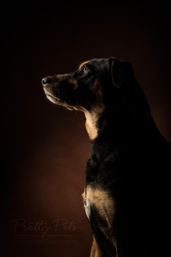 fotoshoot van hond