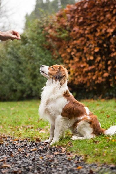 hond belonen met snoepjes tijdens fotoshoot