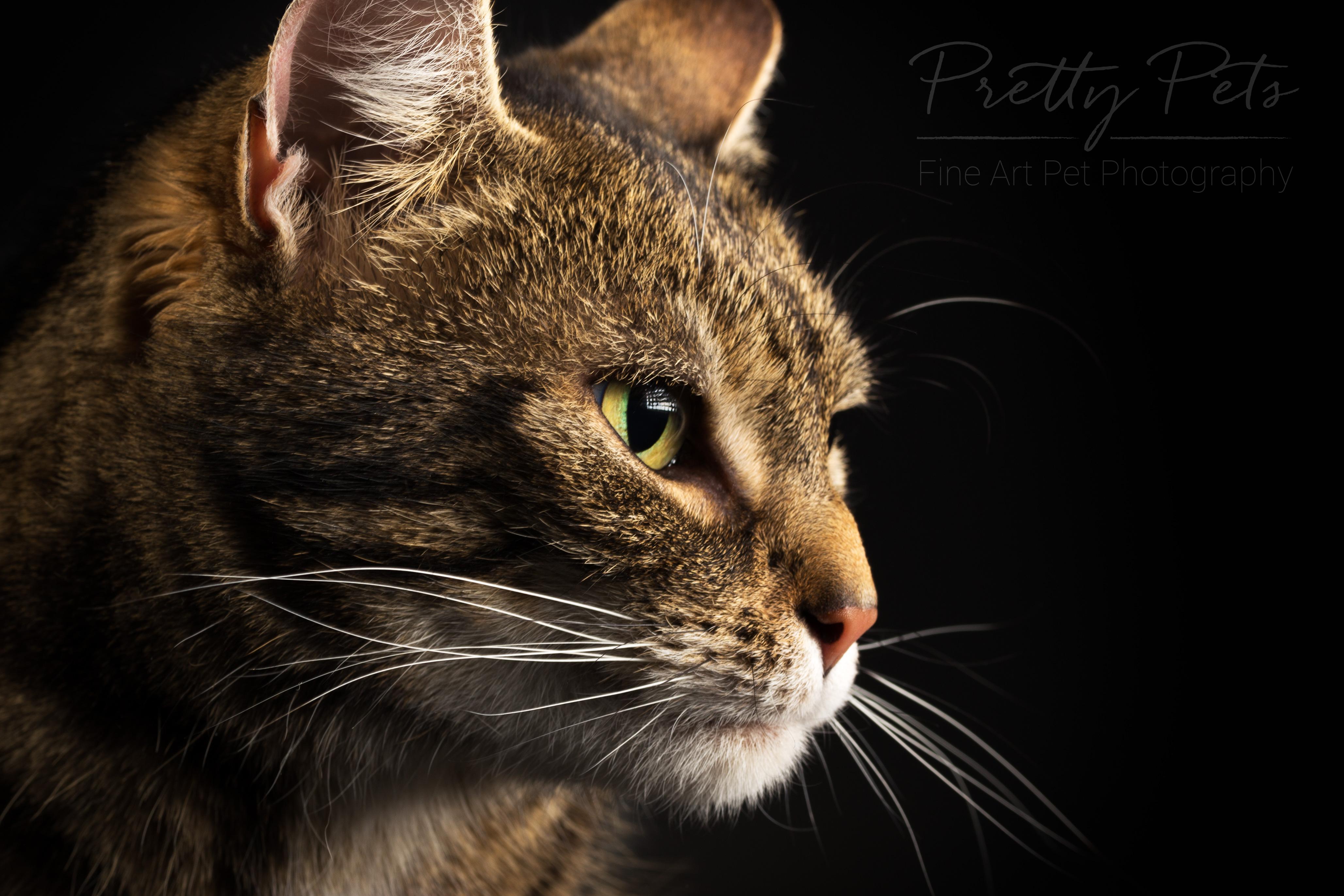 kattenfotografie
